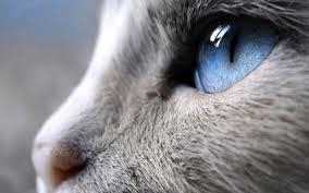 gatos visión