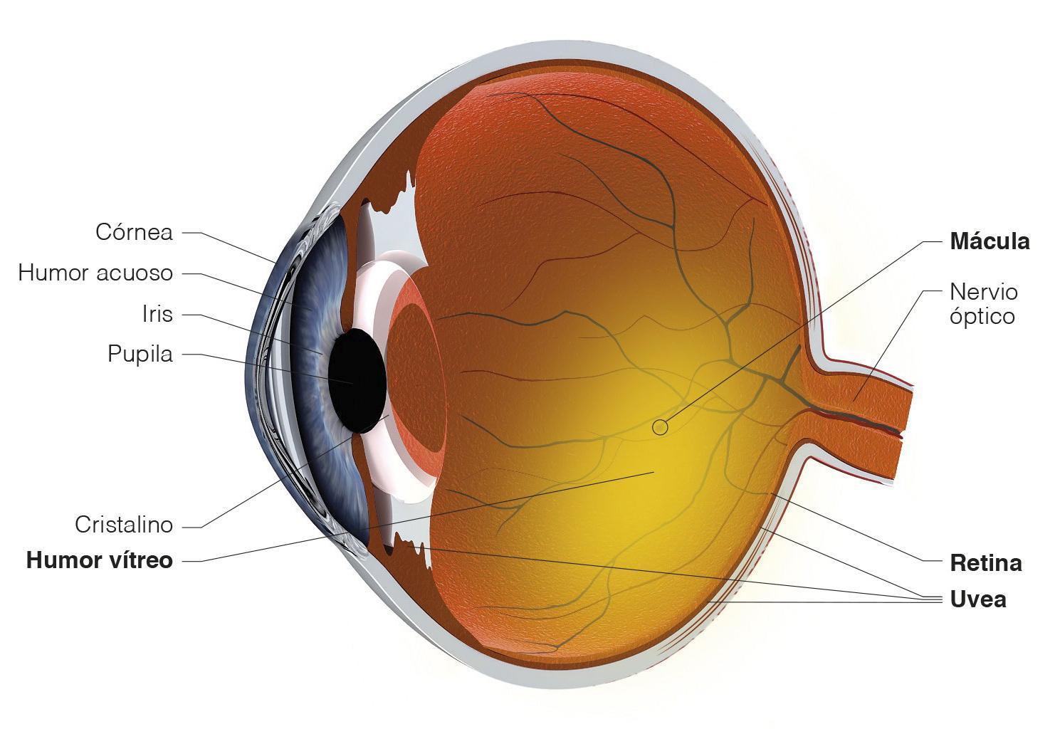 2f6e4f5102 Qué son las cataratas en los ojos y por qué se producen? | Blog de ...
