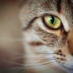 Curiosidades de la vista de los animales